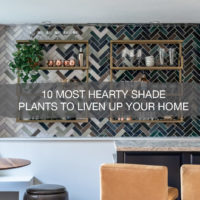 10 Most Hearty Shade Plants To Liven Up Your Home