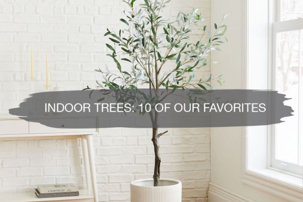 Indoor Trees: 10 of our Favorites | construction2style